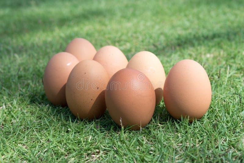 在绿草的鸡蛋 免版税库存图片