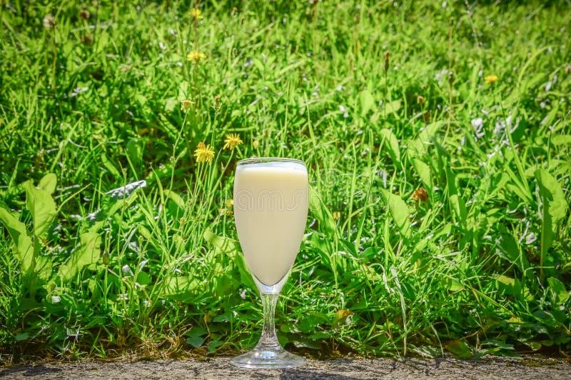 在绿草背景的酪乳玻璃 免版税库存图片