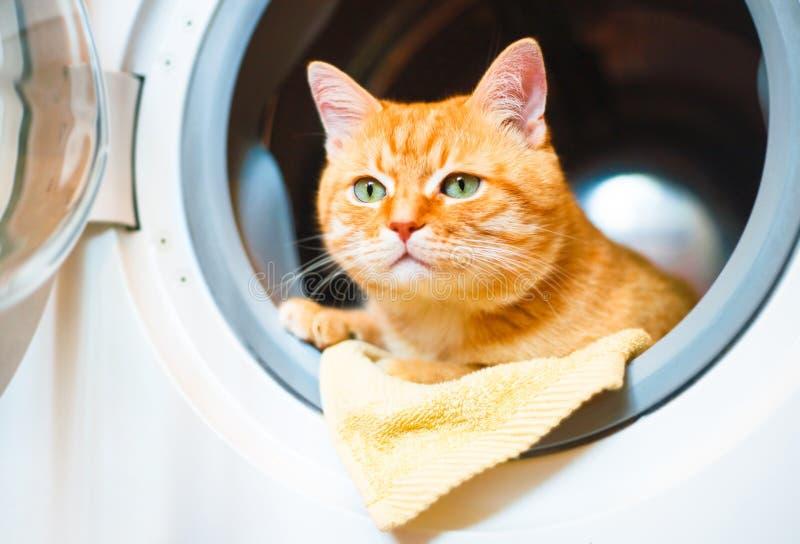 在洗衣机的红色猫 免版税库存图片