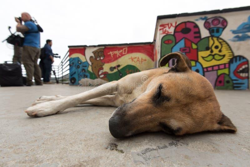 在巴西贫民窟尾随睡觉在地板上 库存照片
