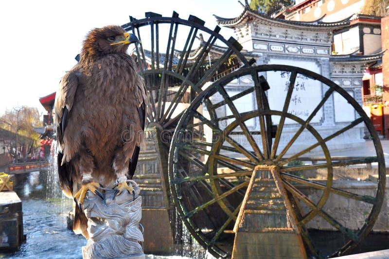 在水车前面的老鹰 免版税库存照片