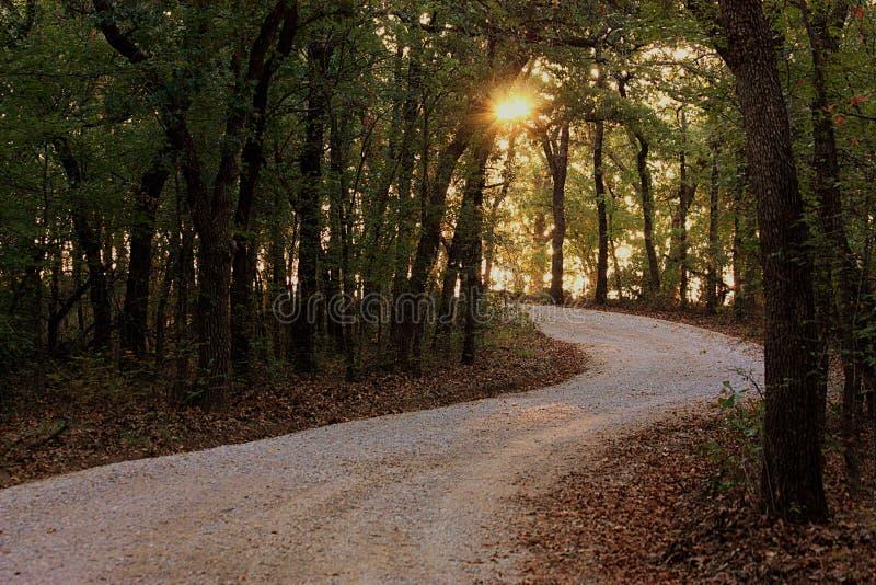 在绕道路下的日出穿过森林 免版税库存图片