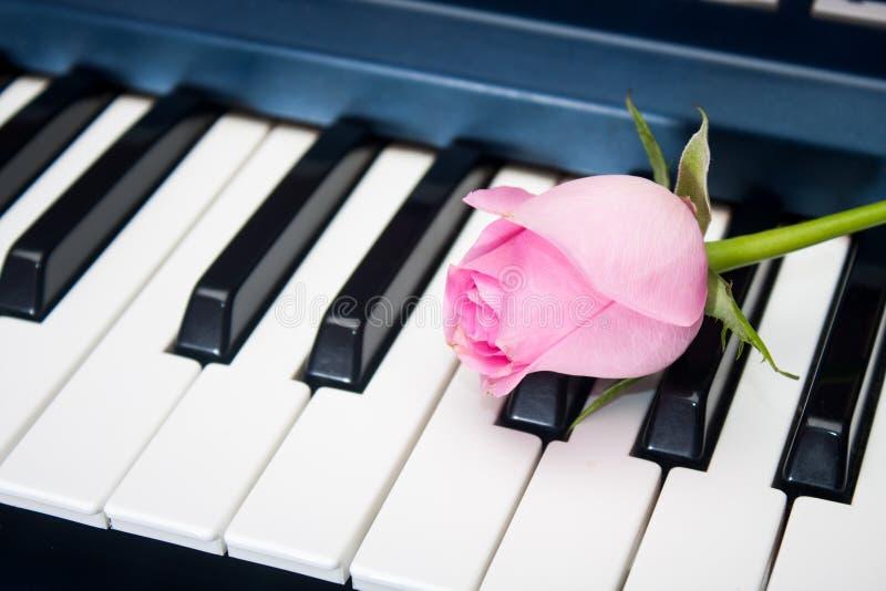 在琴键的桃红色玫瑰 免版税库存照片