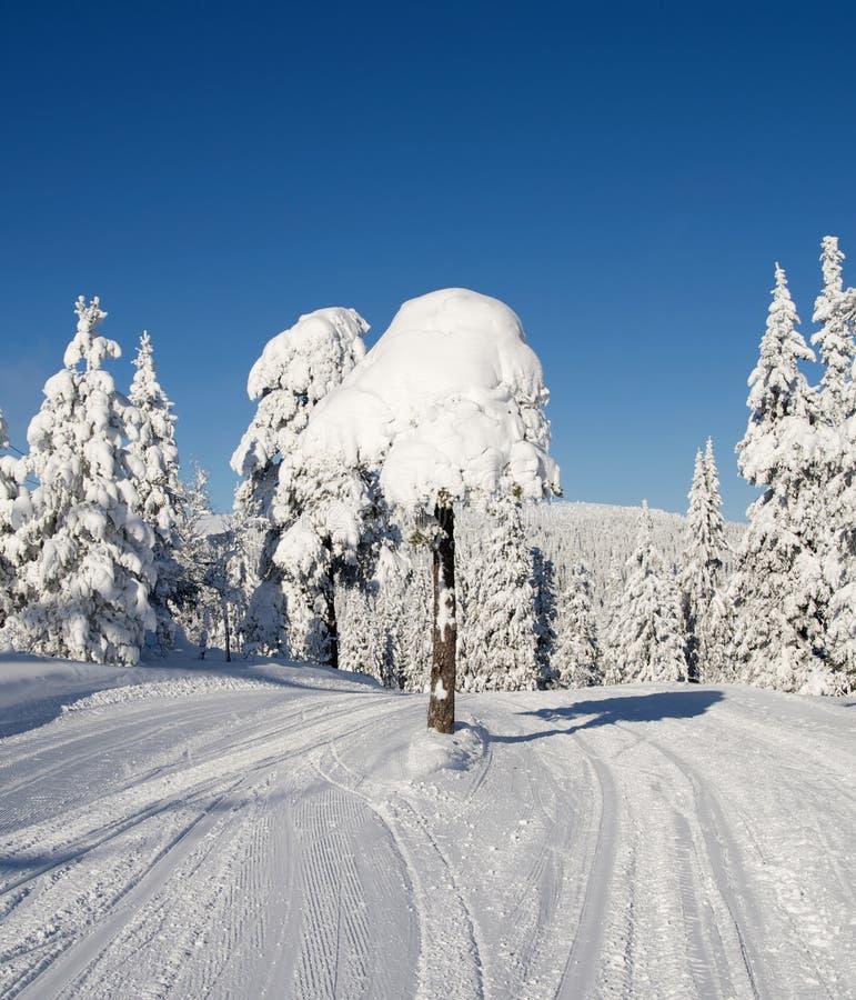 在天空路的树 免版税库存照片