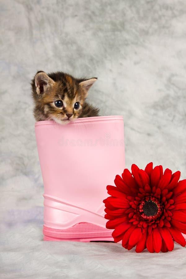 在水鞋子的小猫 库存图片
