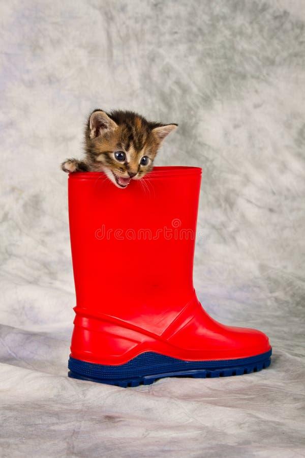 在水鞋子的小猫 图库摄影
