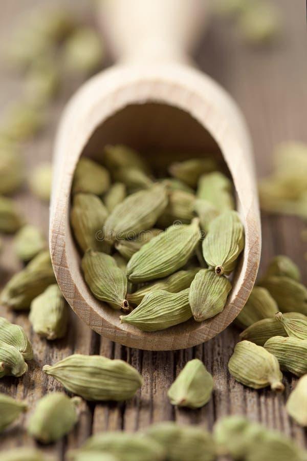 在a的豆蔻果实绿色种子superfood ayurveda香料 库存图片