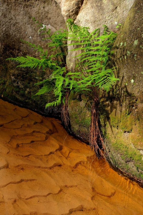 在Aderspach,捷克峭壁的一条小小河  库存照片