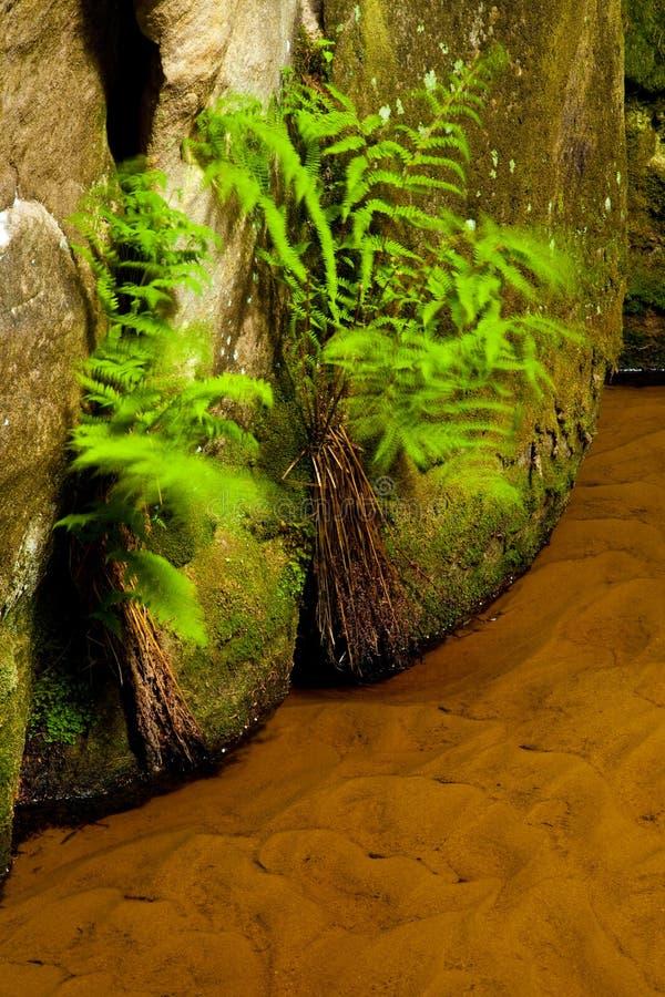 在Aderspach,捷克峭壁的一条小小河  图库摄影