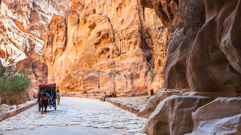 在Al Siq通行证的流浪的支架对Petra镇 免版税图库摄影