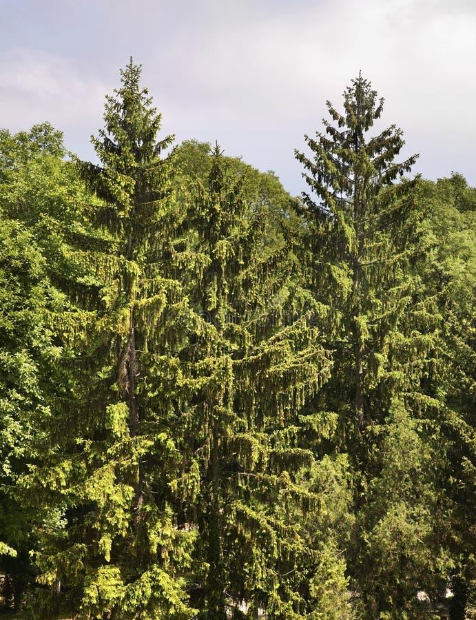 在Aladzha修道院附近的森林 建造者 免版税库存照片