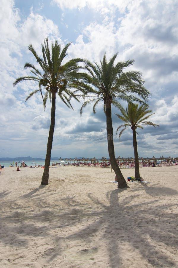 在Alcudia的棕榈树靠岸,马略卡,巴利阿里群岛,西班牙 免版税库存照片