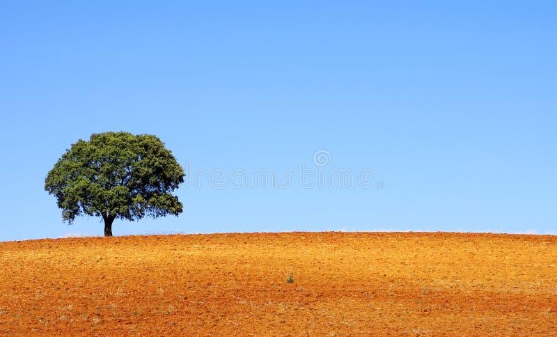 在alentejo地区的偏僻的结构树 免版税图库摄影
