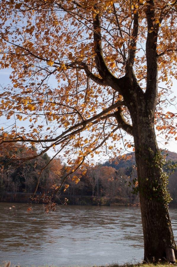 在Allegheny河的一个橡树秋天的 库存照片