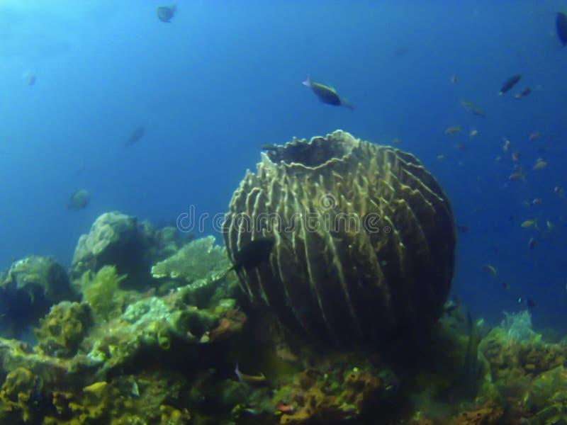 在Amed,凹下去的船潜水的站点,巴厘岛,印度尼西亚的珊瑚礁 免版税库存图片