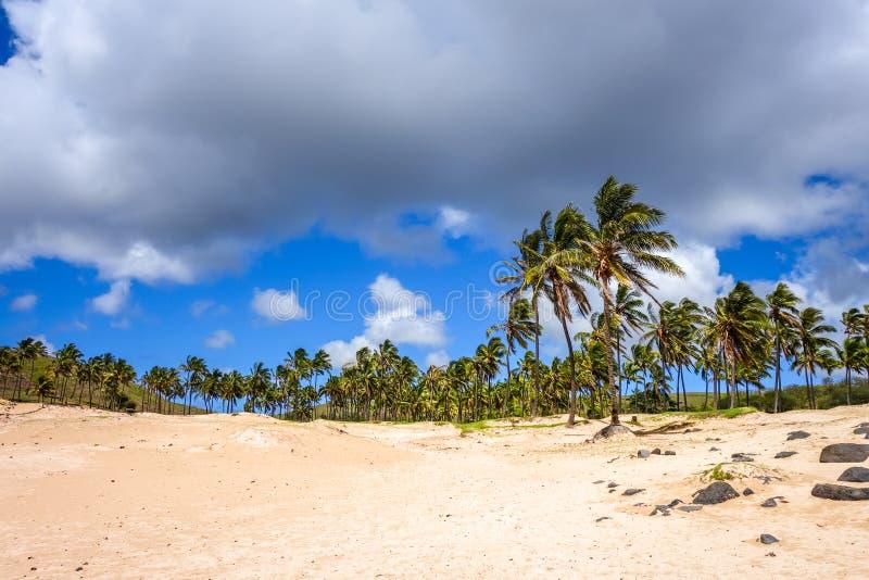 在Anakena的棕榈树靠岸,复活节岛 免版税库存照片