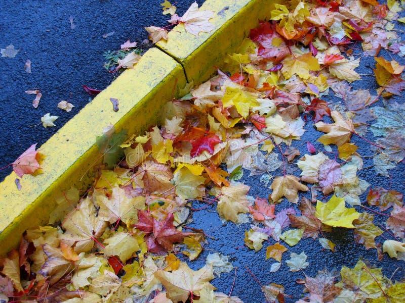 在asfalt的湿五颜六色的marple叶子 免版税库存照片