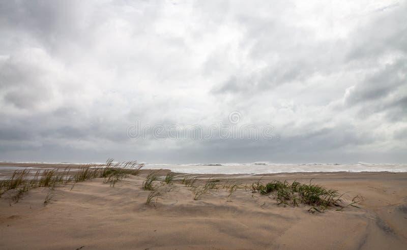 在Assateague全国野生生物保护区的沙丘 免版税图库摄影
