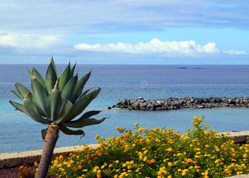 在Athlantic海洋水的与热带植物的美丽的景色和云彩在El杜克附近的前景的在特内里费岛,金丝雀靠岸 库存照片