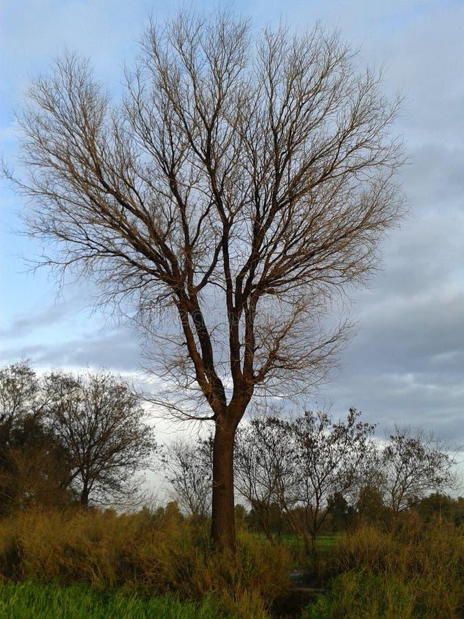 在autm的树 免版税库存照片