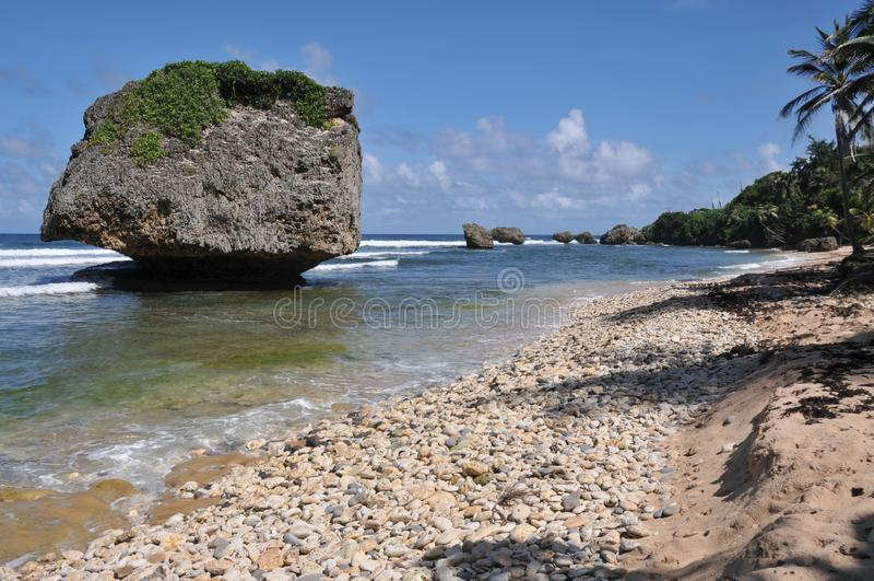 在Bathsheba海滩巴巴多斯的珊瑚岩层 图库摄影