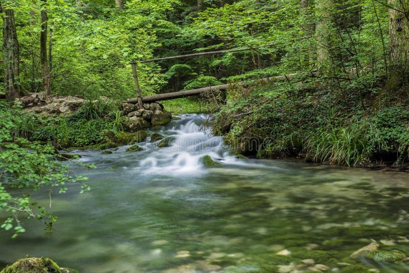 在Beusnita河的小木桥在森林 库存图片