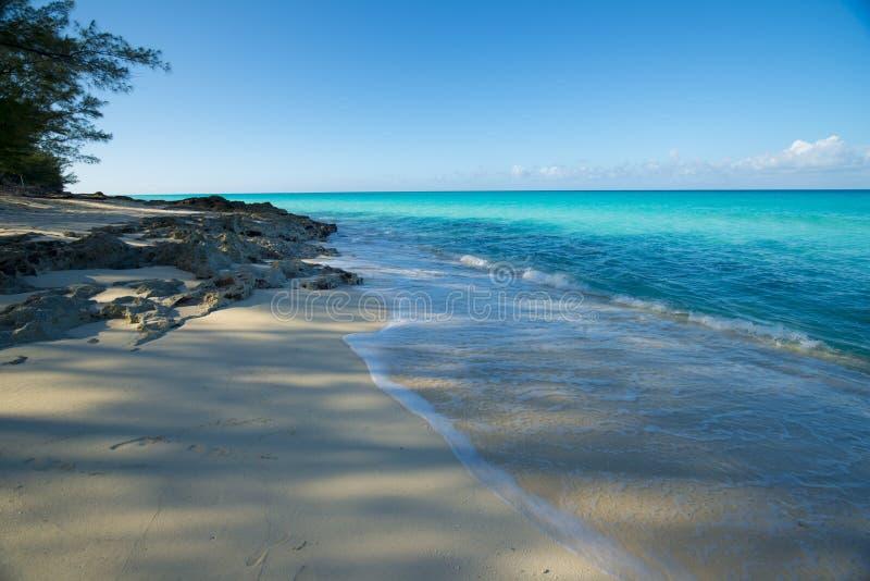 在Bimini的海滩与树和植被 免版税库存图片