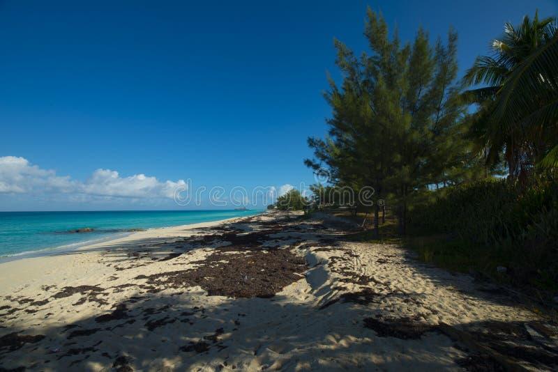 在Bimini的海滩 免版税库存图片