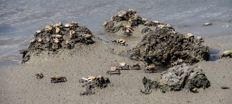 在Boca瑟米-螃蟹附近的看法 免版税库存照片