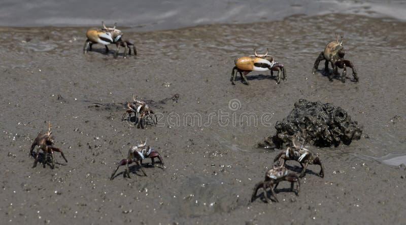 在Boca瑟米-螃蟹附近的看法 库存照片