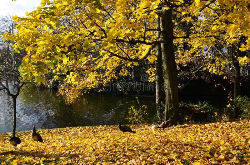 在Bois de Vincennes的秋天 库存图片