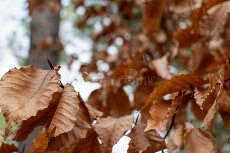 在Bokeh森林风景的秋叶 库存照片