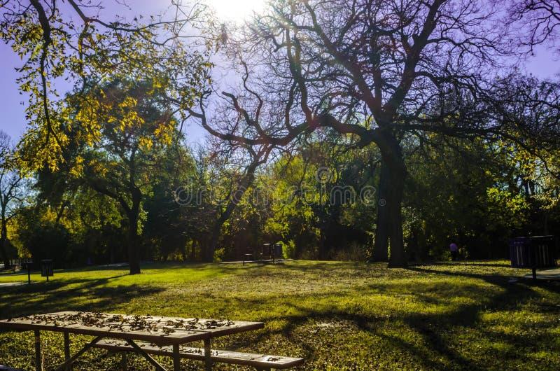 在Brackenridge公园的晴天 图库摄影