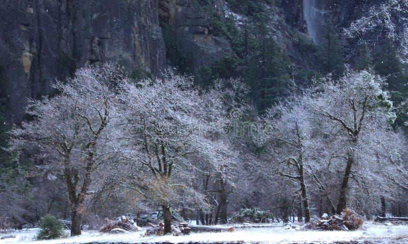 在Bridalveil秋天附近的第一降雪优胜美地国家公园 库存照片
