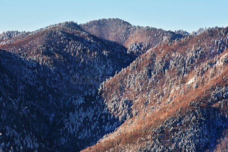 在Bucegi山的冬天风景 免版税库存照片