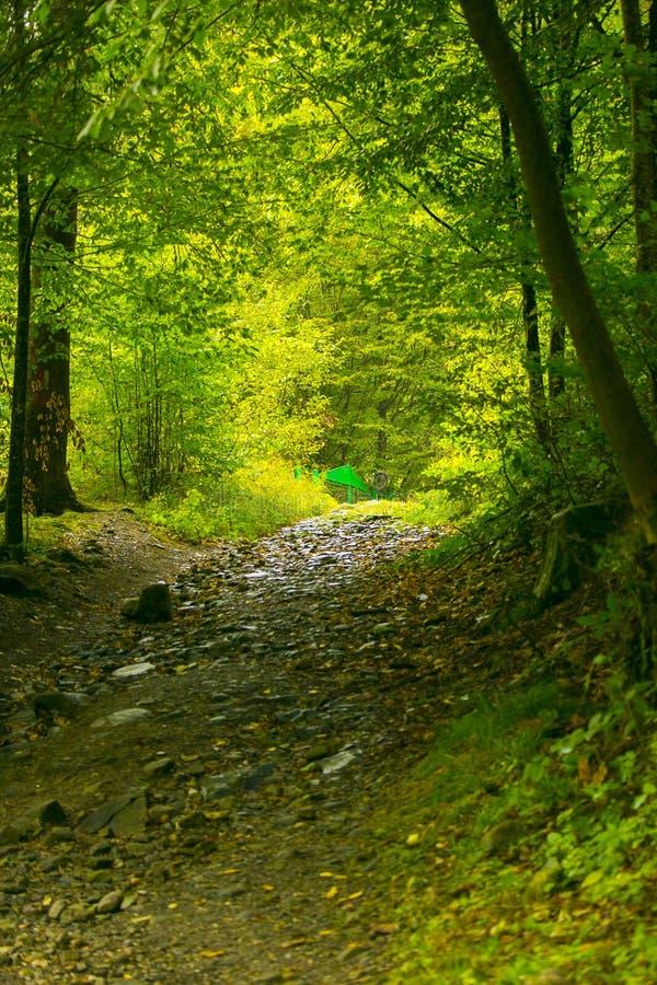 在Bucegi山的狂放的森林足迹 免版税库存图片