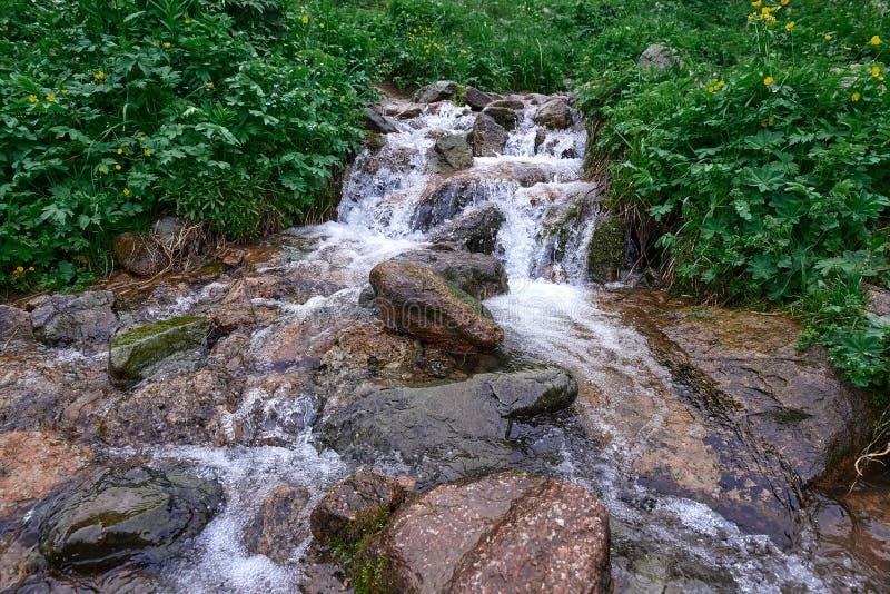在butakovsky附近的河在阿尔玛蒂绿色附近 库存图片