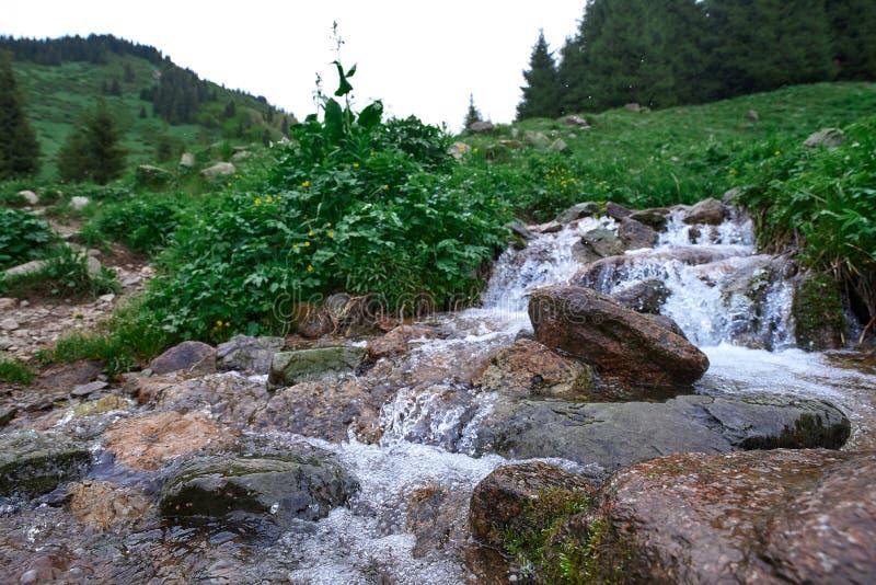 在butakovsky watterfall附近的河在阿尔玛蒂附近的6月 免版税库存图片