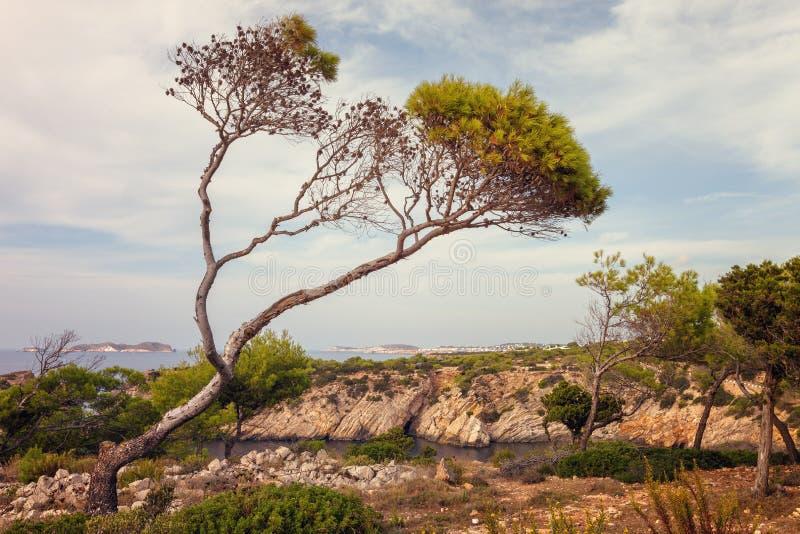 在Cala Vadella,伊维萨岛,西班牙附近的风景 图库摄影