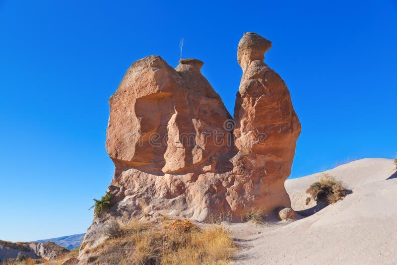 在Cappadocia土耳其的骆驼岩石 免版税库存图片