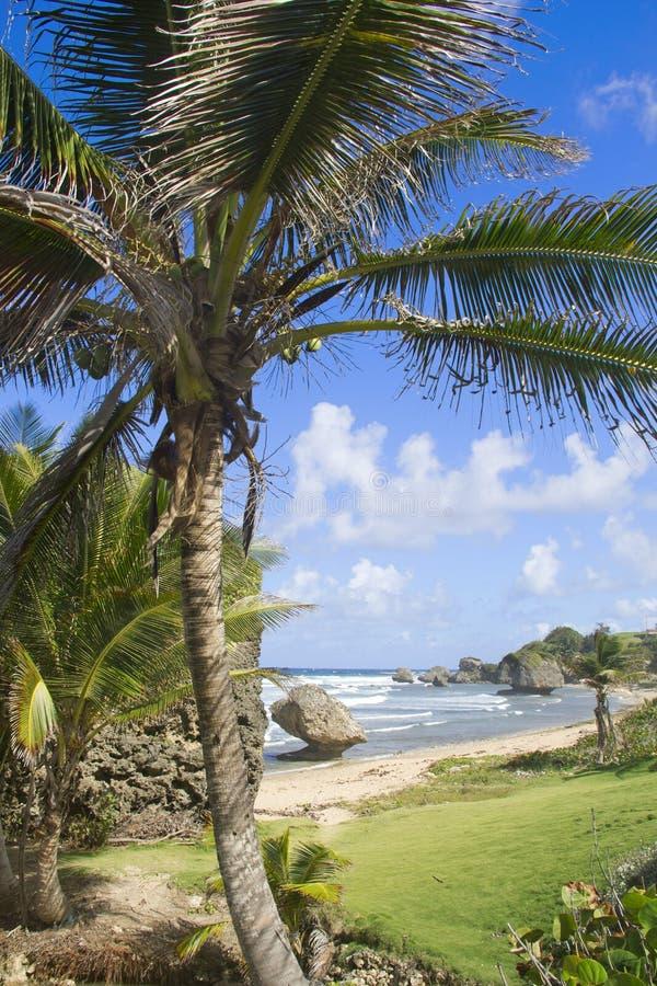 在Cattlewash的棕榈树 免版税库存照片