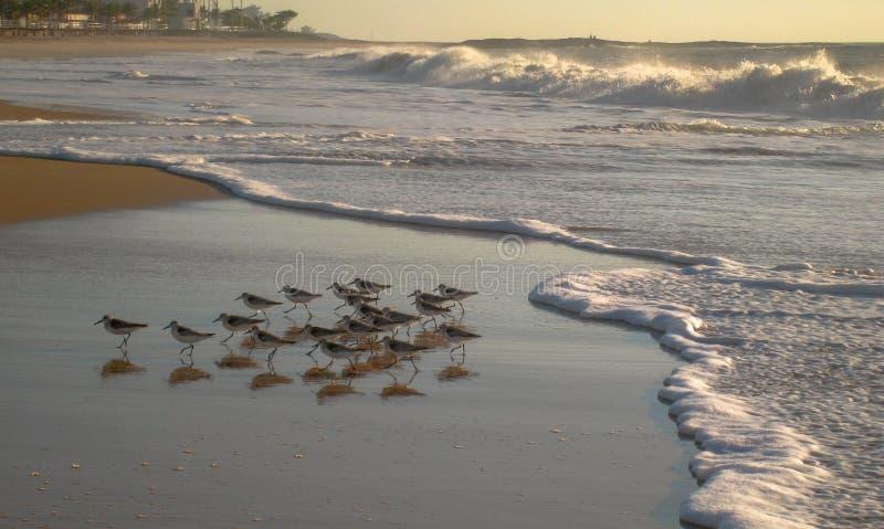 在Cavaleirous黎明的海浪前, RJ,巴西 图库摄影
