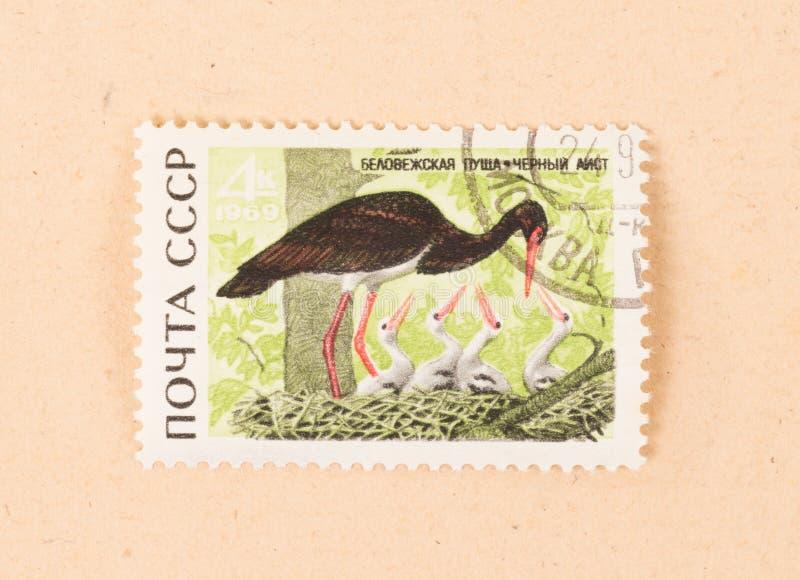 在CCCP打印的邮票显示一只黑鹳,大约1970年 免版税库存图片
