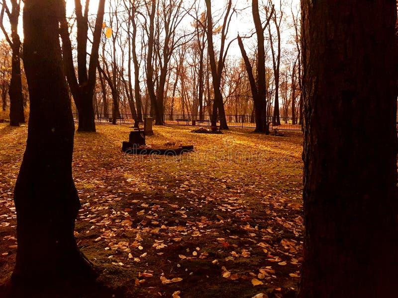 在cementary的树 库存照片