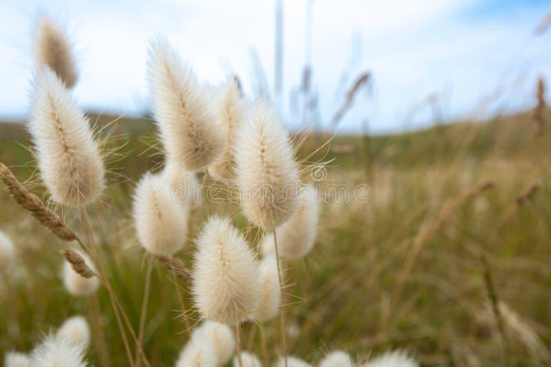在Cezembre海岛上的软的花在布里坦尼 库存图片