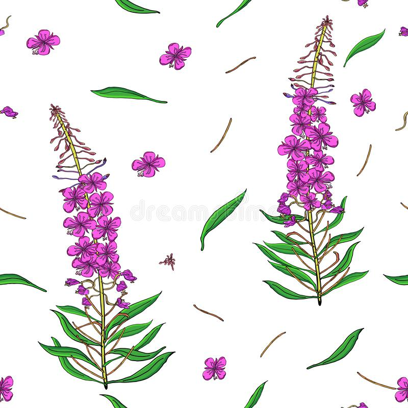 在Chamerion angustifolium野花的无缝的样式 精美花束 自由样式millefleurs 花卉 向量例证