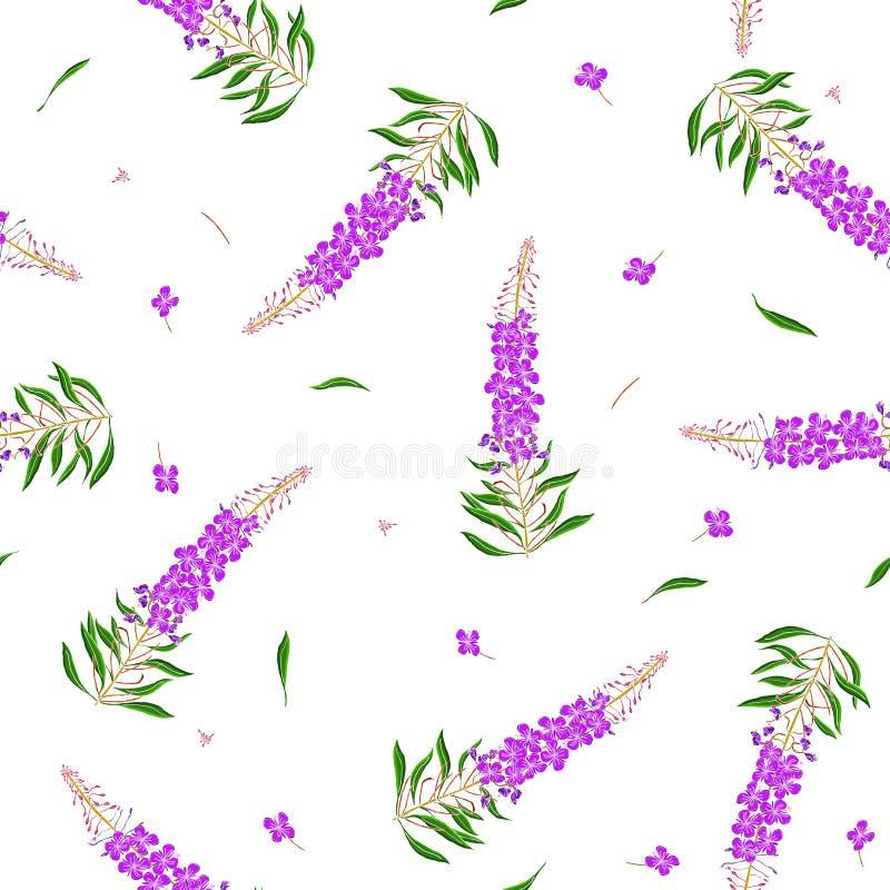 在Chamerion angustifolium野花的无缝的样式 精美花束 自由样式millefleurs 花卉 皇族释放例证