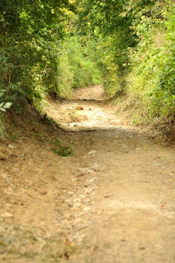 在Cheile Nerei自然保留的平安的乡下路 库存照片