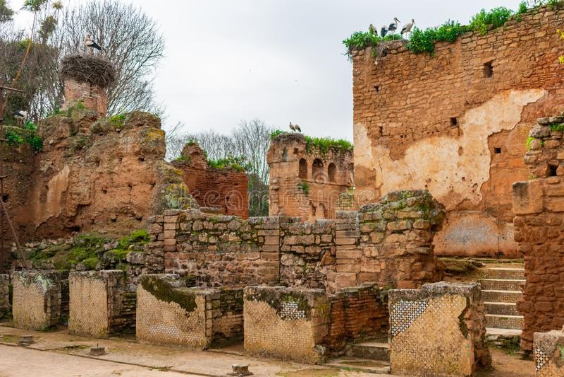 在Chellah的废墟在拉巴特摩洛哥 免版税库存照片