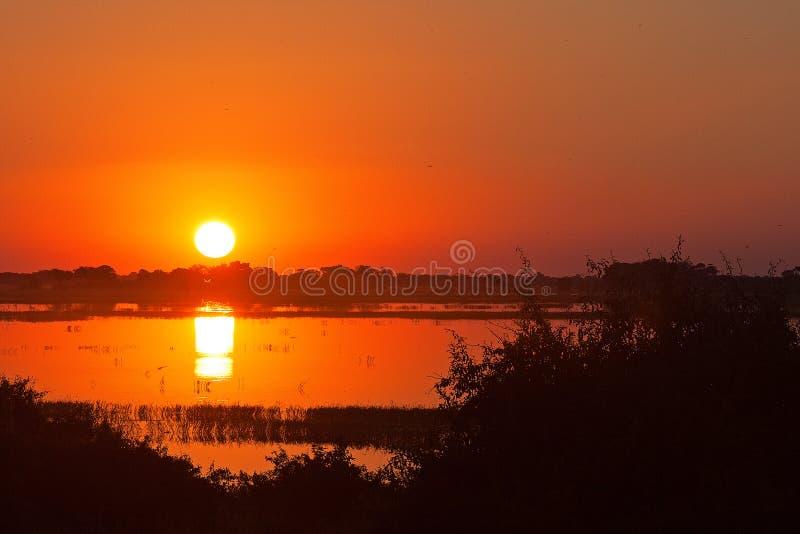在CHOBE河的发光的红色日落 库存图片